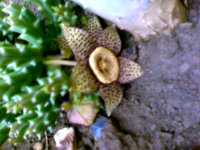 Flor027x200.png
